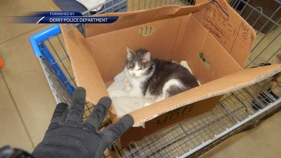 Police searching for suspects who abandoned cat at Walmart