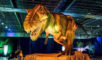 Discover the Dinosaurs: Unleashed