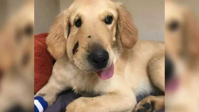 A dog taking a walk in the desert in the Anthem area got a nasty surprise Friday morning when he was attacked by a rattlesnake.