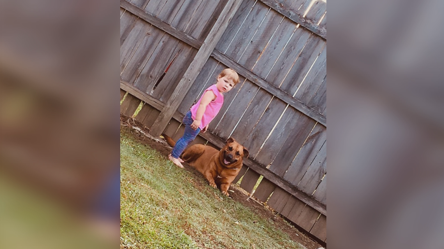 Grandfather mauled while rescuing 2-year-old from family dog