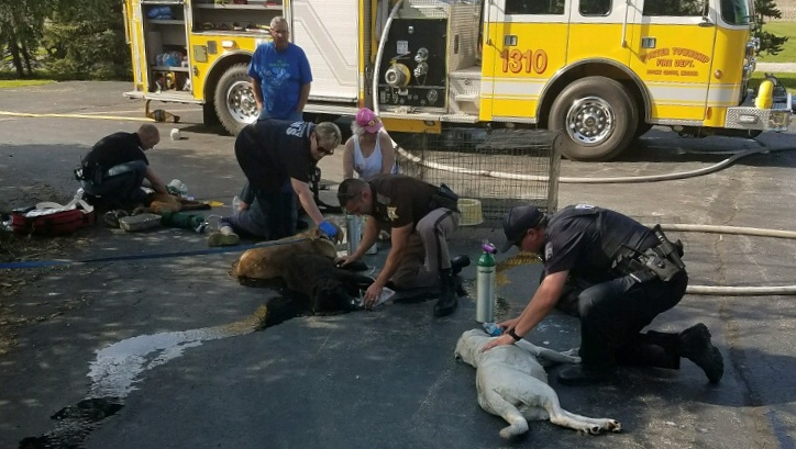 Authorities helped rescue dogs from a burning garage