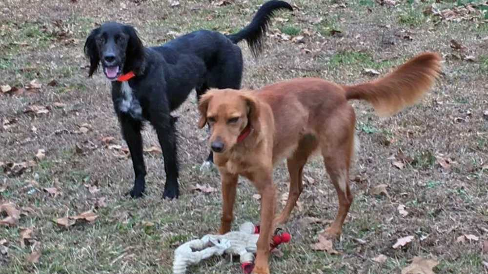 Bo and Gracie, killed by pack of dogs