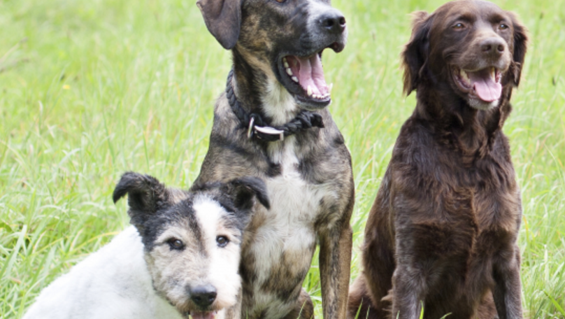 What is America's favorite dog breed for 2017?