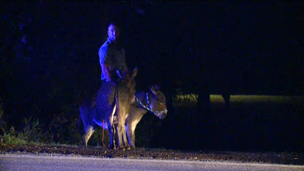Donkeys found 180th & Q