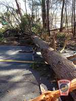 Autumn Ave. in Duxbury is blocked by a large tree down.