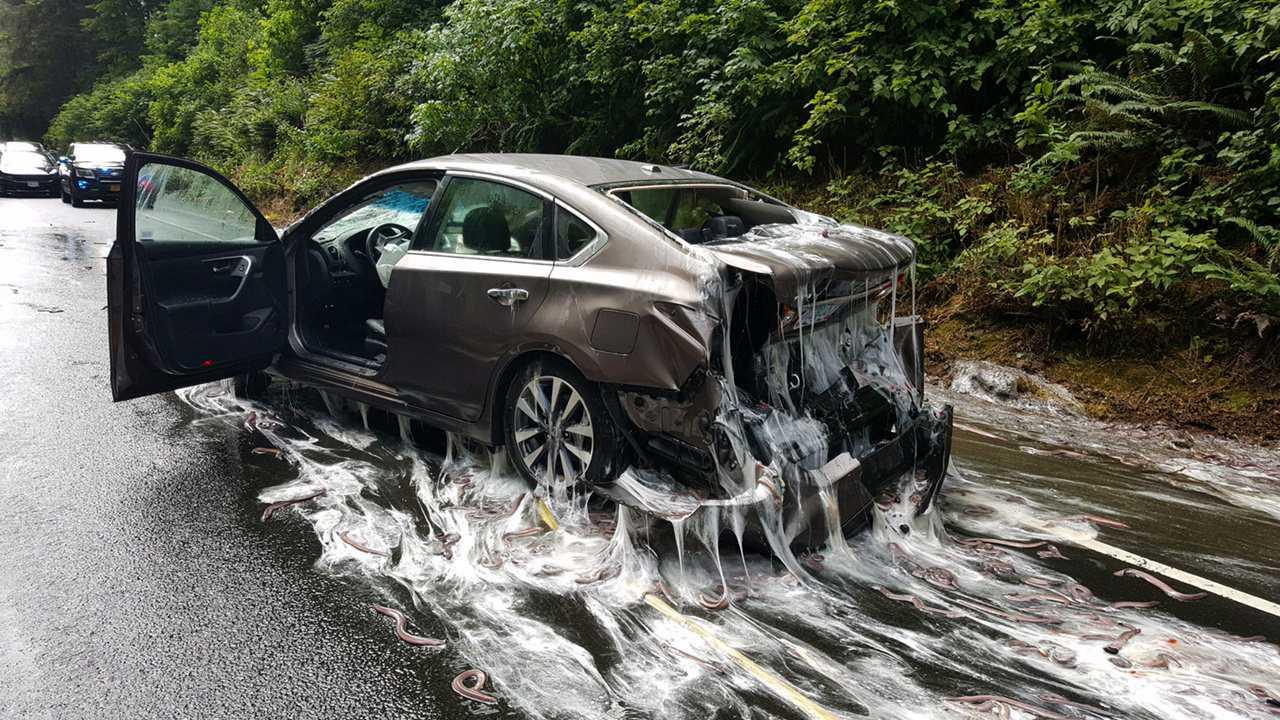 eels on highway