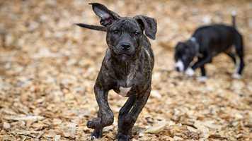 Eddy the puppy