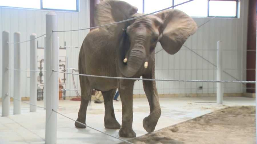 WTAE - Seeni the elephant