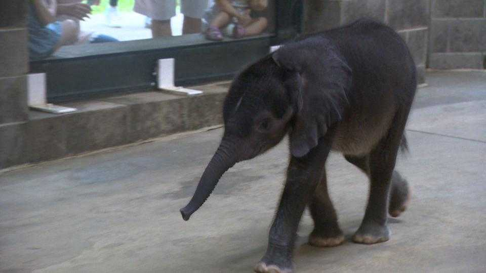 Baby elephant at Pittsburgh Zoo
