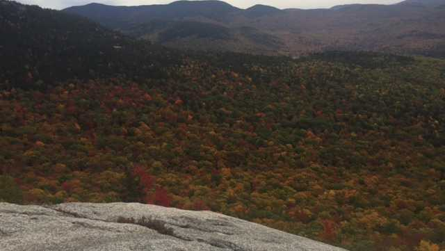 Foliage in the White Mountains
