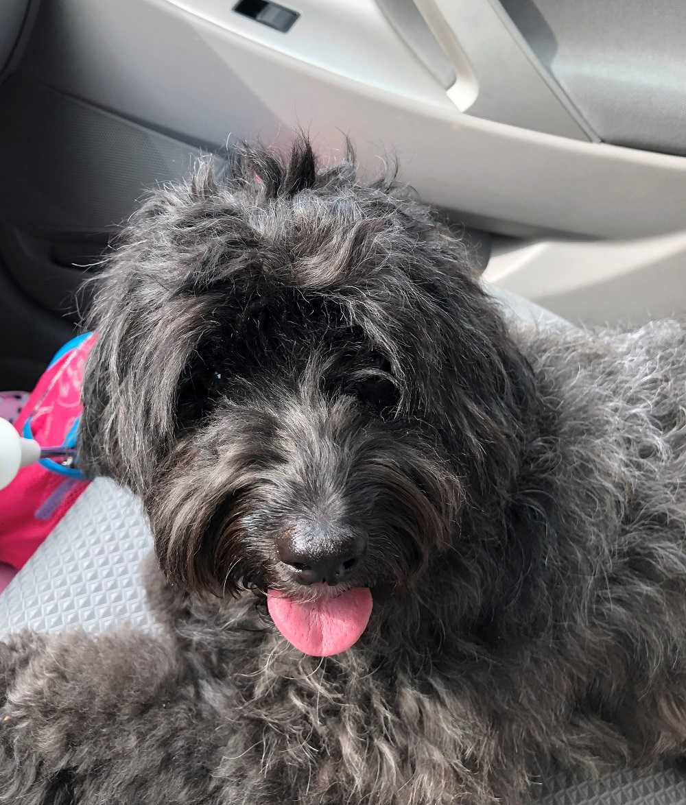 Lost and Found Pets in the WXII 12 Community