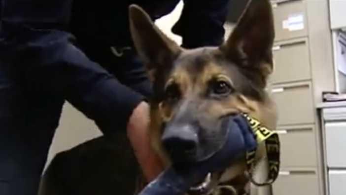 German shepherd from animal shelter becomes K-9 in Kentucky
