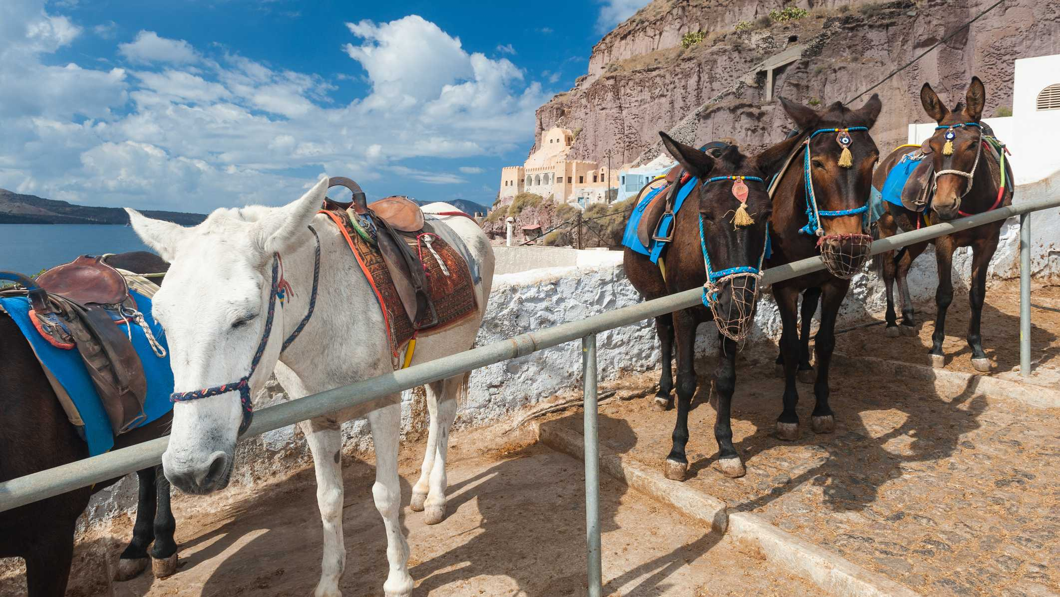 Donkeys are a popular means of transport for tourists on the Greek island of Santorini, especially to be able to climb up and down the Caldera, which is quite steep.