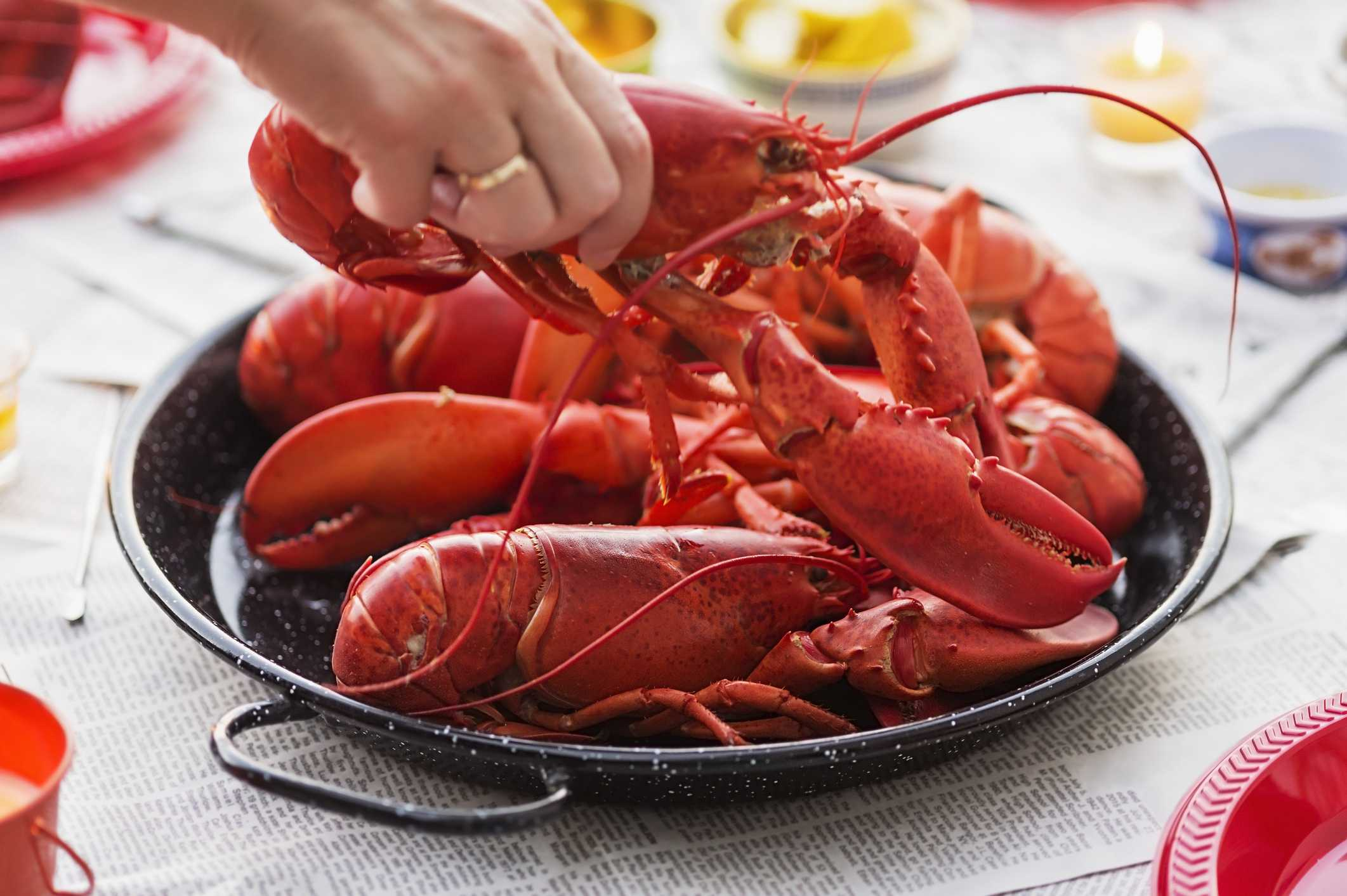 Regulators puts brakes on restaurant that wanted to sedate lobsters with pot
