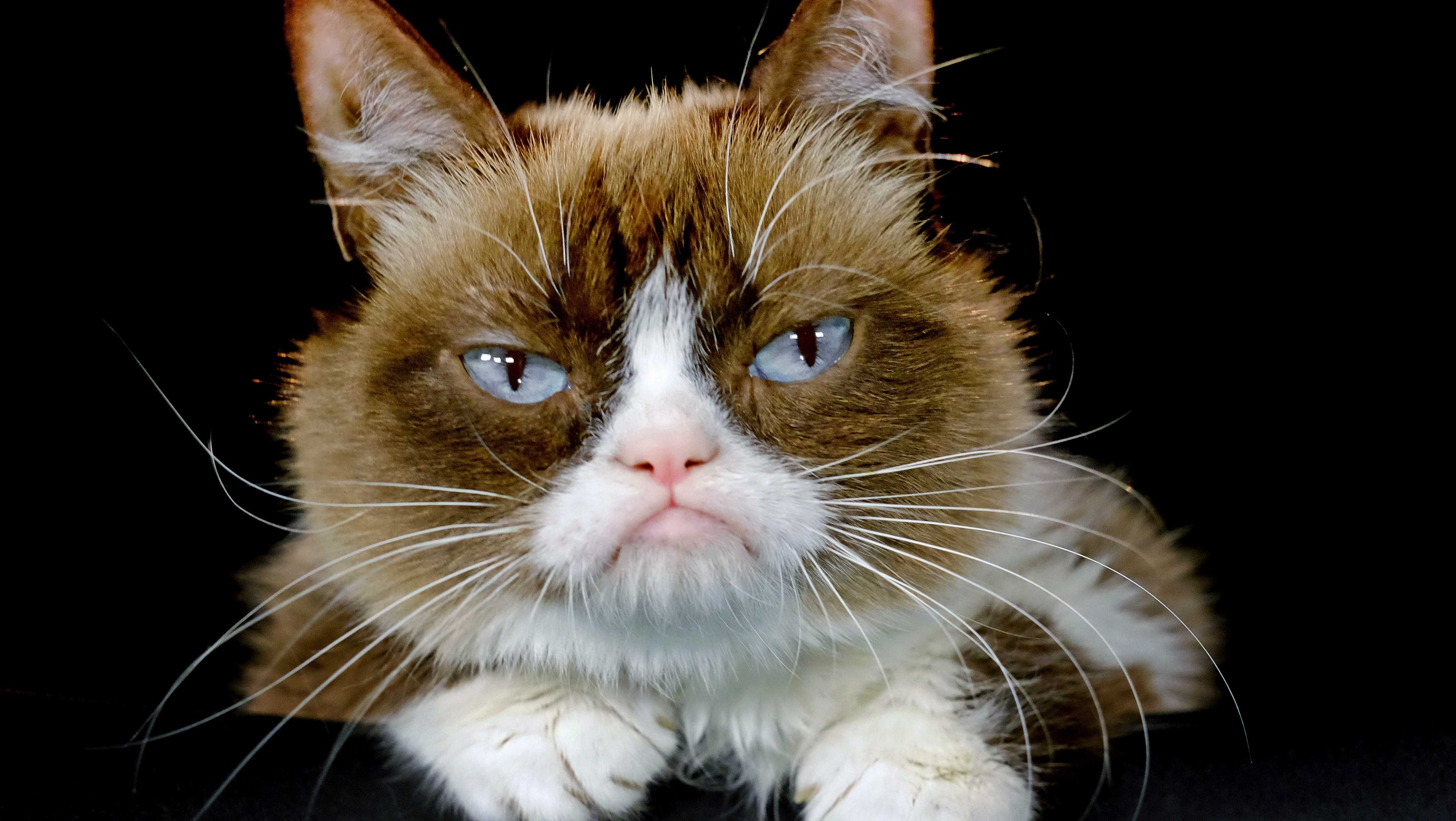 This Dec. 1, 2015 file photo shows Grumpy Cat posing for a photo in Los Angeles.
