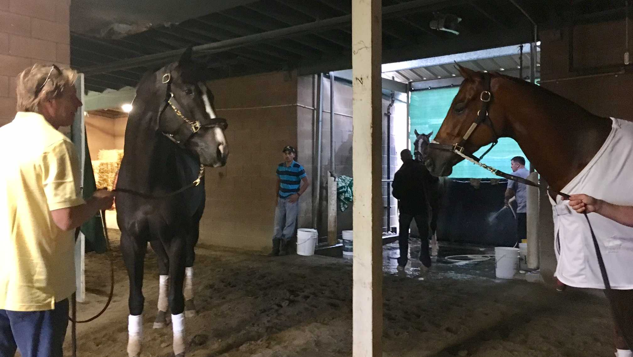 Gun Runner (at right) and Tom's Ready (with trainer Dallas Stewart on the lead shank) eyeball each other in the Breeders' Cup barn at Santa Anita after training. The horses were 1-2 in the Fair Grounds' Louisiana Derby.