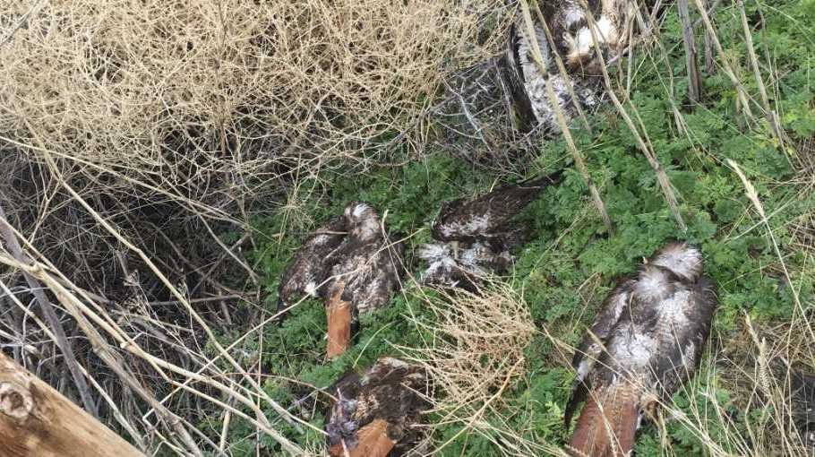 The property was allegedly found littered with bird carcasses.