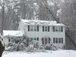Hingham tree into house