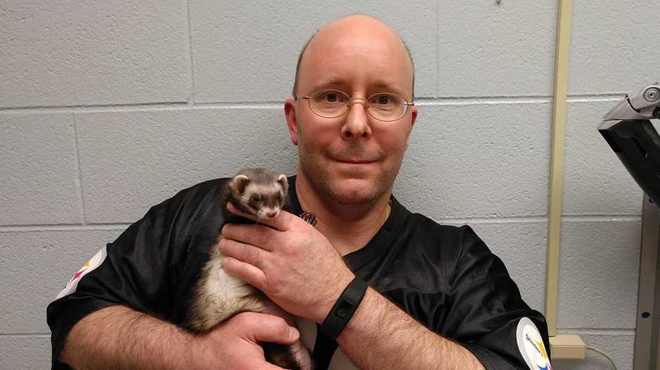 Zelda the ferret receives a pacemaker