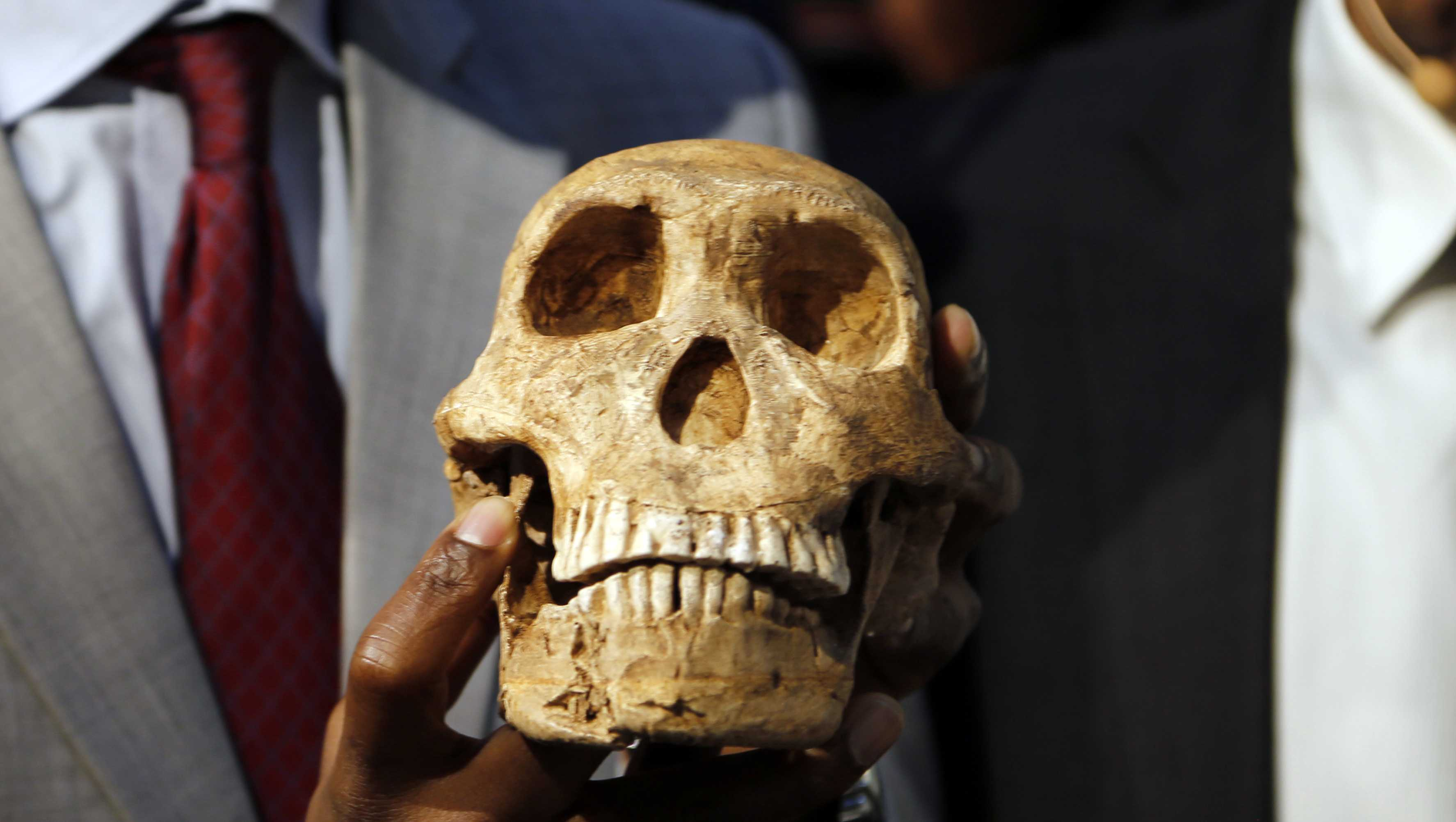A replica skull of a species belonging to the human family tree whose remnants were first discovered in a South African cave in 2013 is held at the unveiling at the Maropeng Museum, near Magaliesburg, South Africa, Tuesday, May 9, 2017. The species lived several hundred thousand years ago, indicating the creature was alive at the same time as the first humans in Africa, scientists said Tuesday.