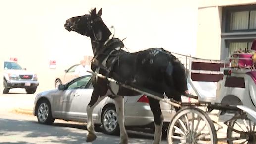 Man in dinosaur costume spooks Charleston carriage horses