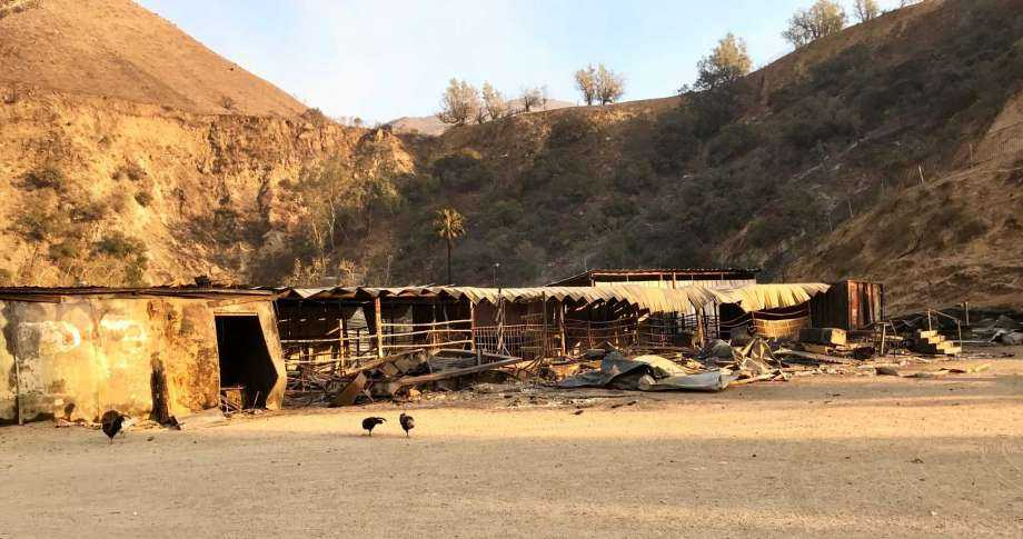 Trapped in their stalls, 30 horses burned to death in California wildfire