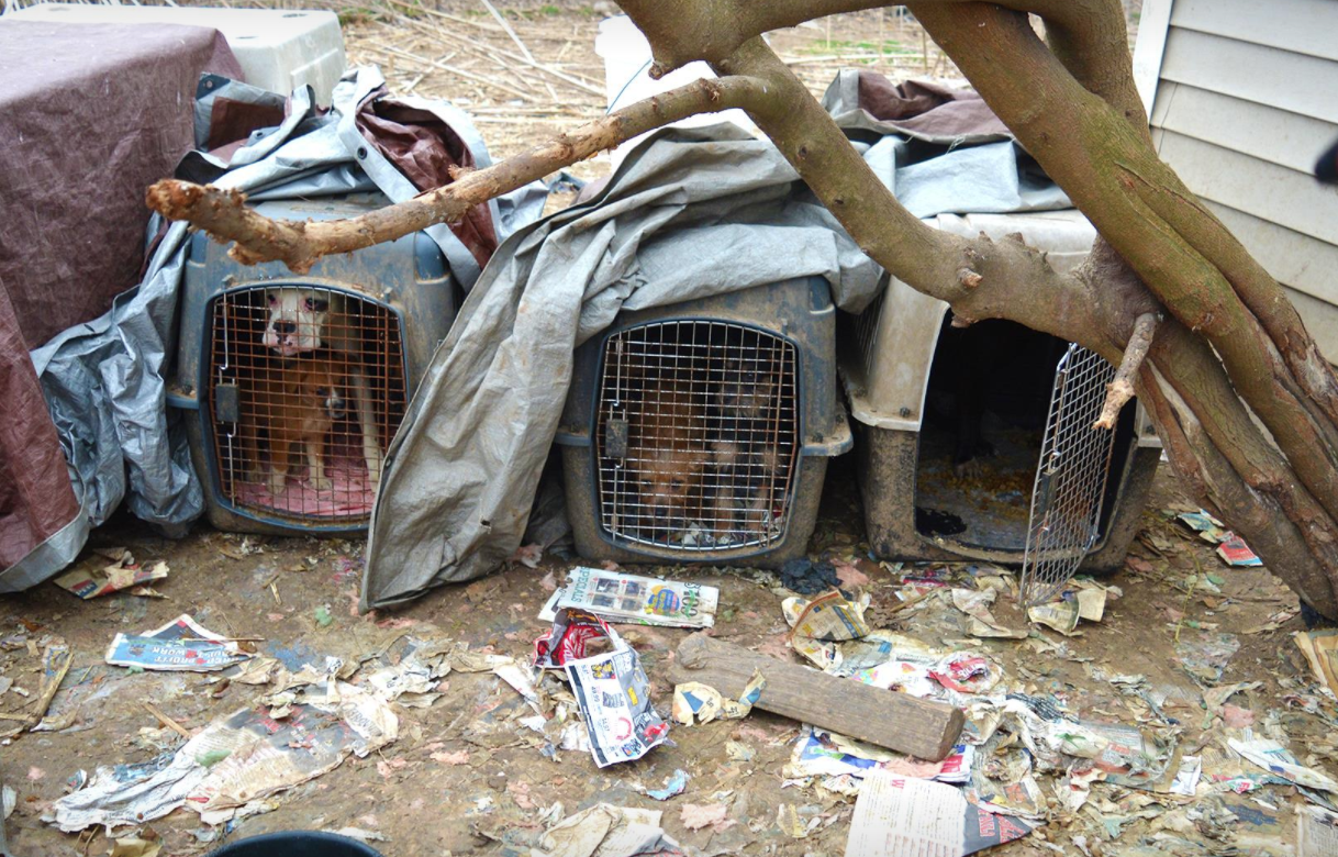 101 dogs, cats rescued from