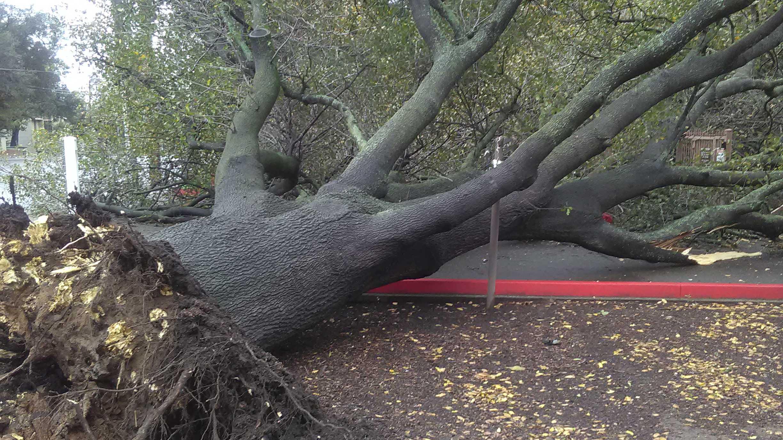Oak tree falls, blocks Carmichael apartment complex Dec. 7, 2017