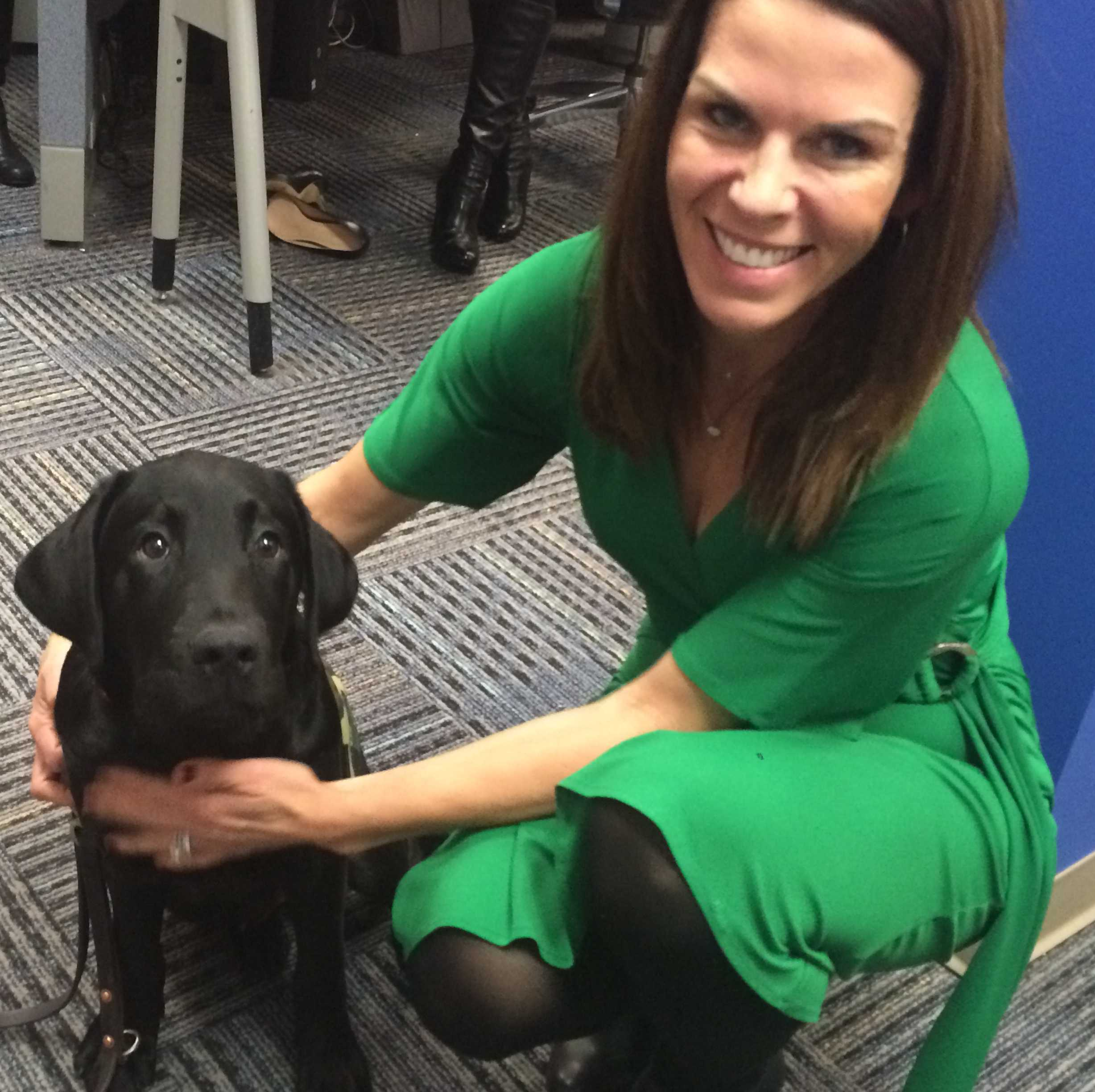 Charlie, a service dog in training with America's VetDogs, is greeted by 11 News reporter Megan Pringle.