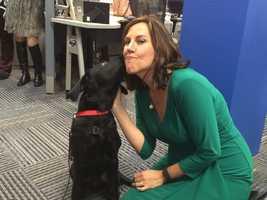 Charlie, a service dog -in-training, give 11 News' Jennifer Franciotti a kiss.