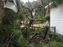 Beaufort tree down