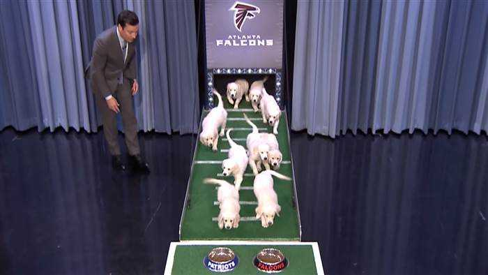 Puppies predict winner of Super Bowl LI