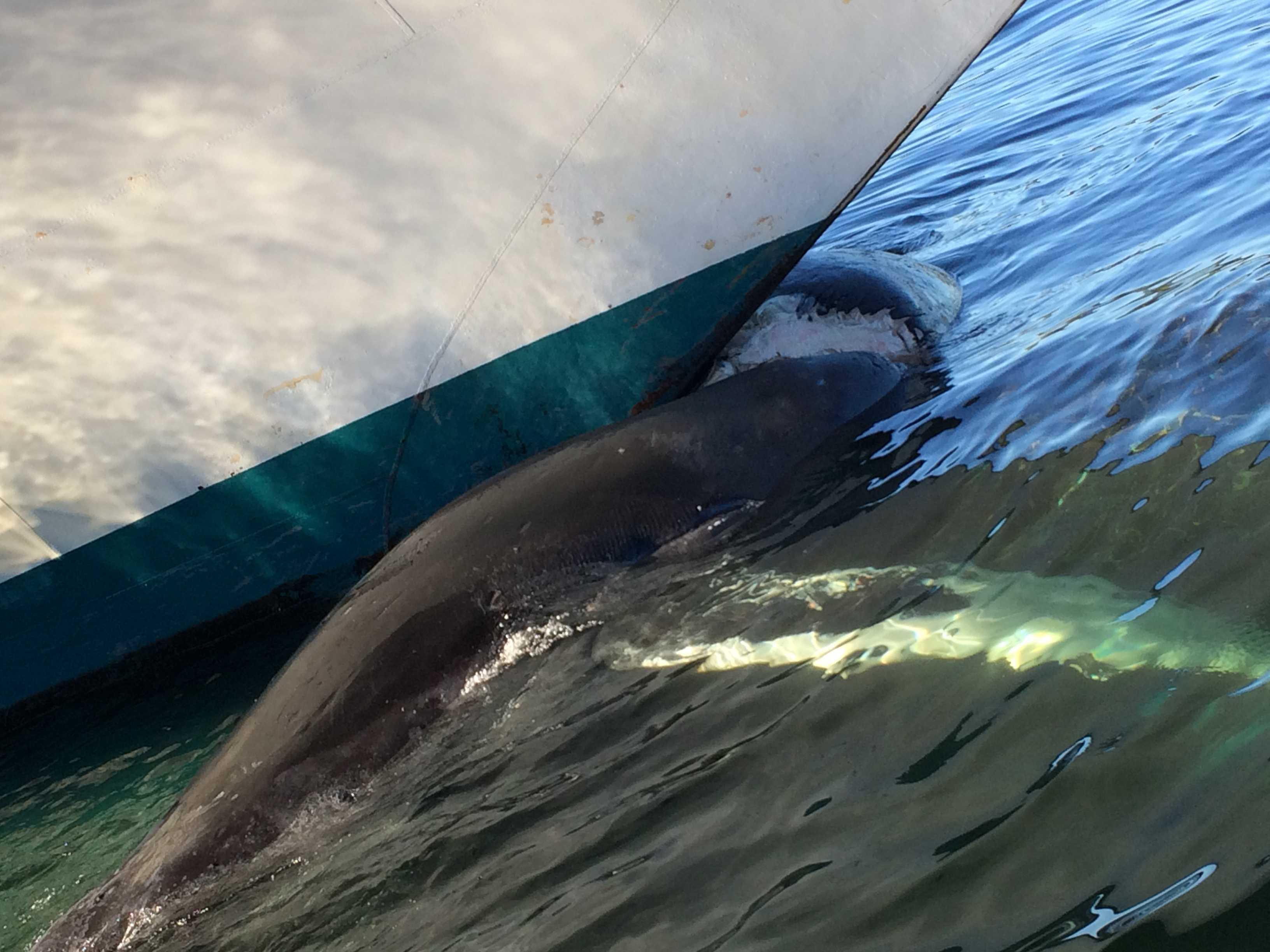 NOAA Statement on Ketchikan humpback whale