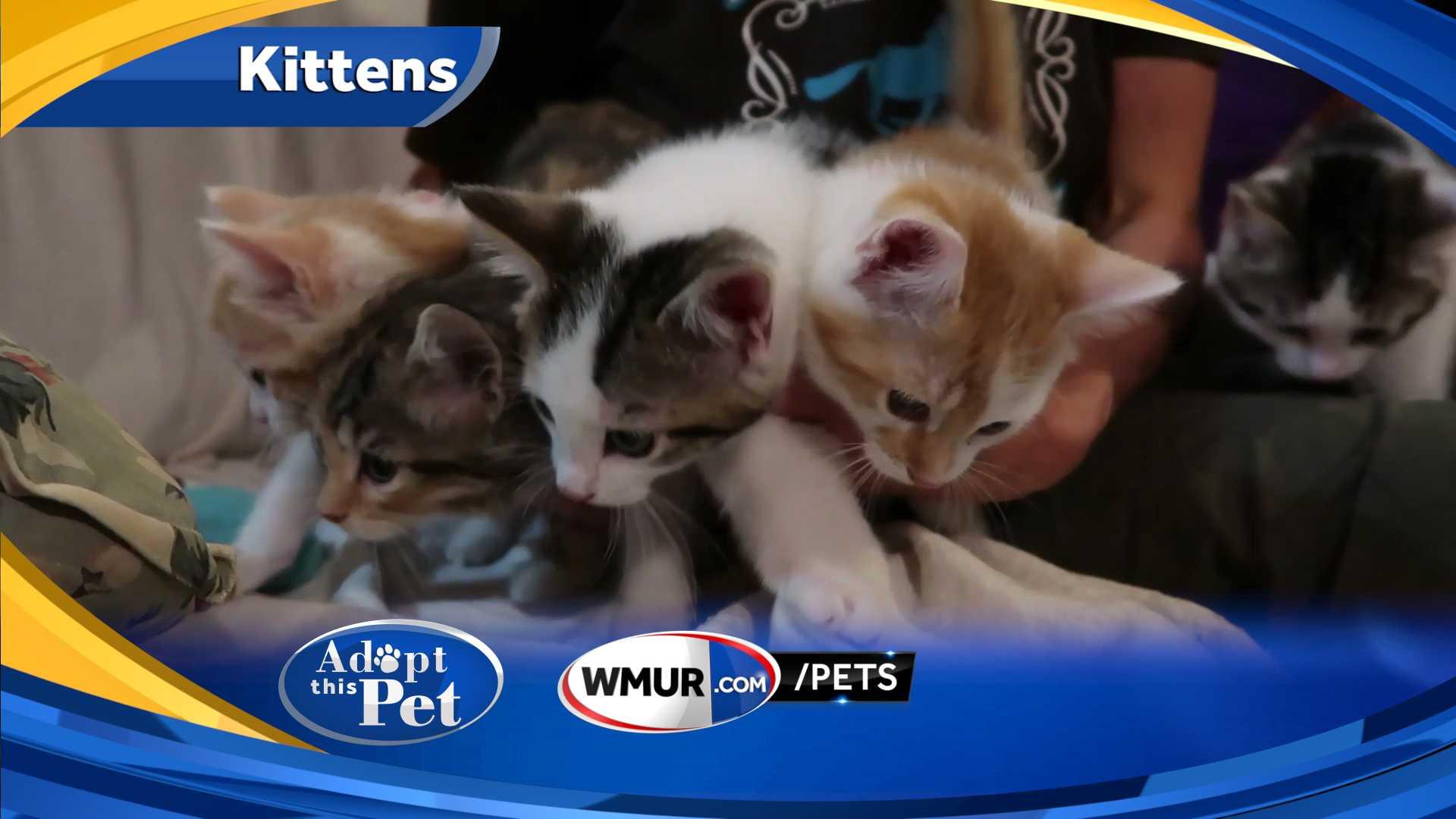 Adopt This Pet Kittens