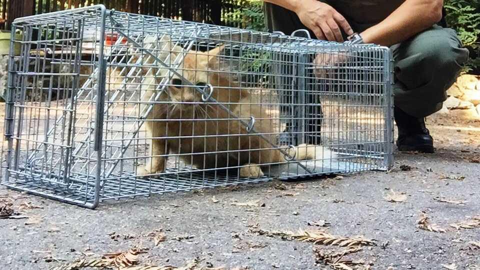 Feral cat rescued