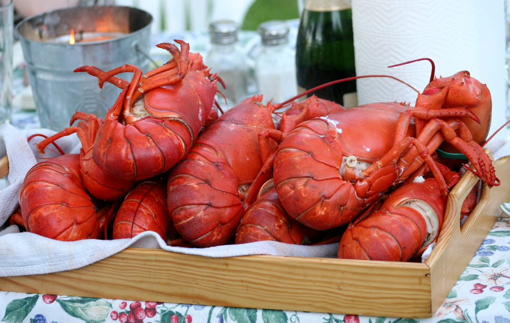 Switzerland Bans Boiling Conscious Lobsters Alive