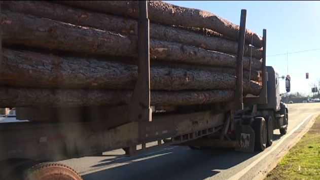 Log smashes through windshield