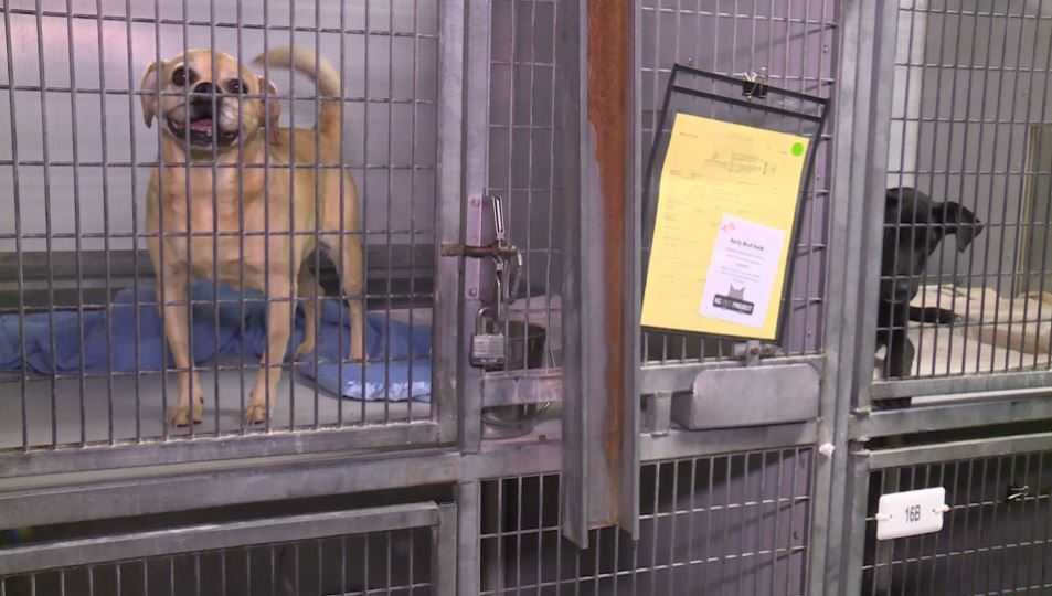 SoCal animal shelters busy with owners looking for runaway pets