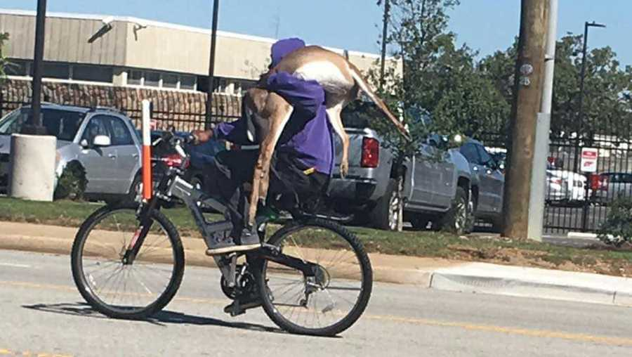 so here s a man riding a bicycle with a deer on his shoulder on a