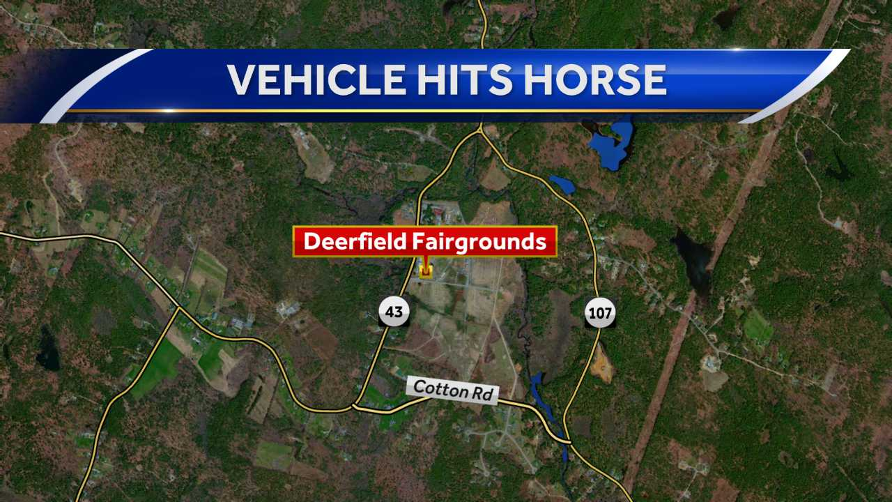 Vehicle hits horse