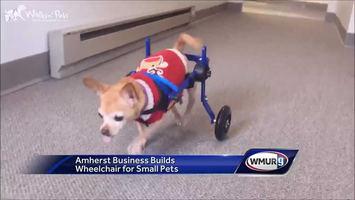 amherst company builds wheelchair for small pets