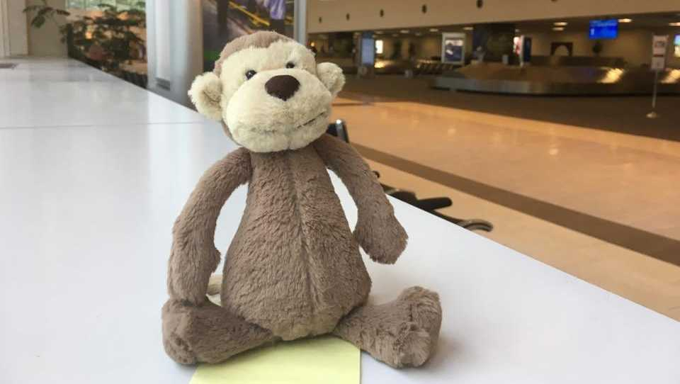 lost monkey at airport