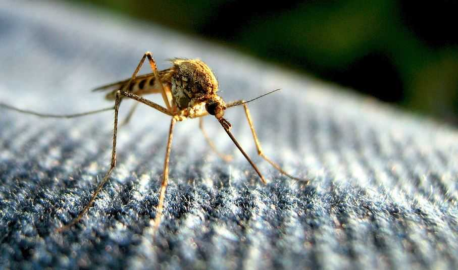 City of Spartanburg confirms first human case of West Nile Virus