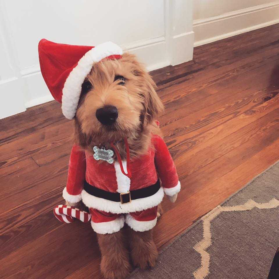 check out these awesome adorable christmas pictures from wdsu viewers