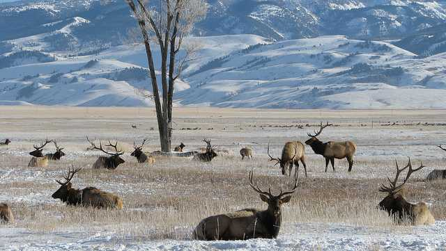 National Elk Refuge in Wyoming