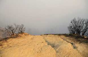 Wildfires actually have some benefits for nature, such as renewing soil and regenerating forests.