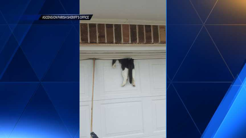 Louisiana Sheriffu0027s Deputy Rescues Cat Stuck Between Garage Door And Wall