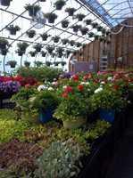 Nicole's Greenhouse & Florist in Pembroke