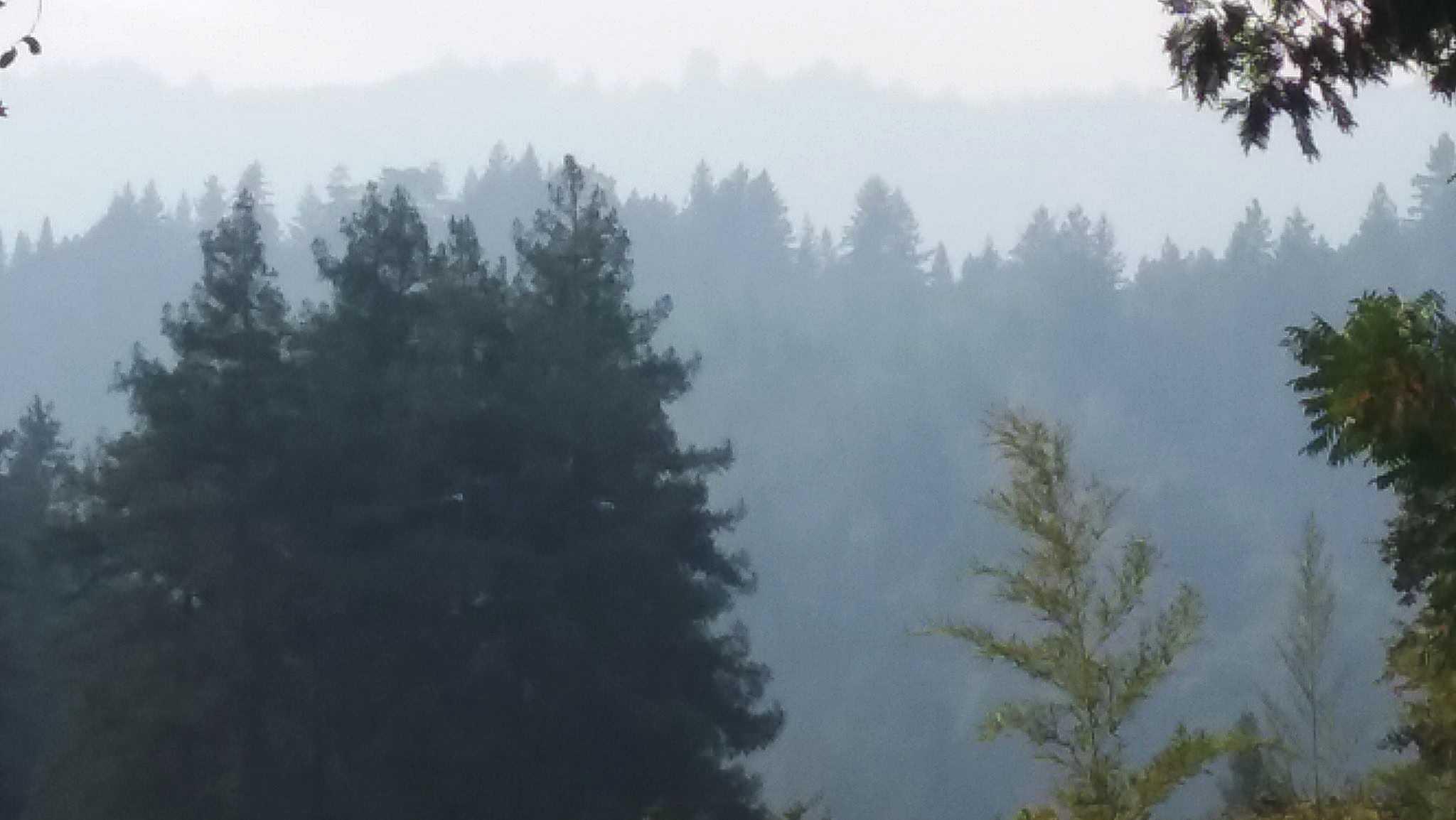 Smokey skies in Santa Cruz mountains
