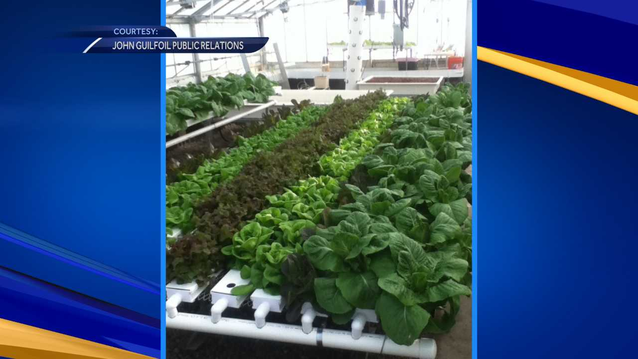 UNH providing fresh vegetables for Oyster River students